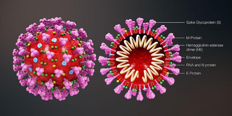 3D animace ukazující strukturu koronaviru.