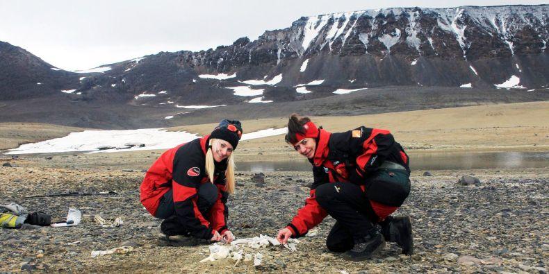Barbora Chattová (vlevo) s Alenou Žákovskou odebírají vzorky z mrtvého těla tuleně.