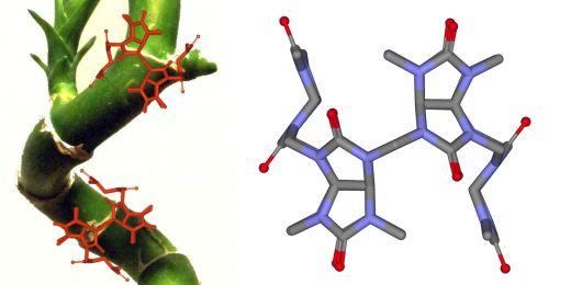 Bambusuril může posloužit například k čištění odpadních vod nebo přepravě léčiv v organismu.