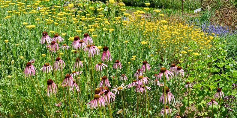 Zahrada plná léčivek a dalších rostlin se nachází na Kraví hoře.