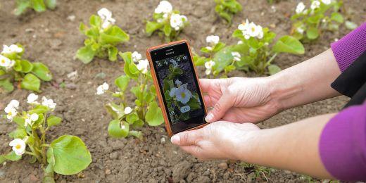 Vyfocenou květinu určí botanici a odpověď zašlou zpět uživateli.