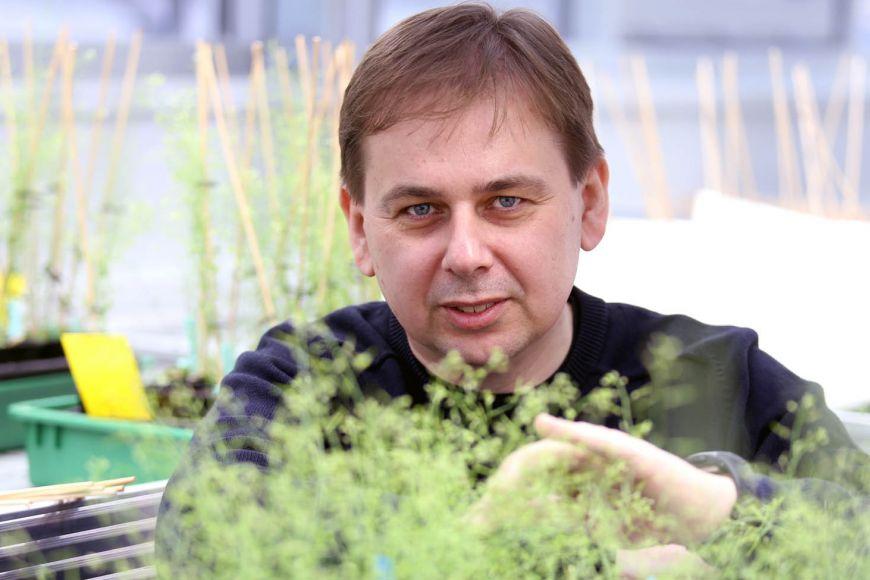 Karel Říha, zástupce ředitele pro vědu vinstitutu CEITEC Masarykovy univerzity.