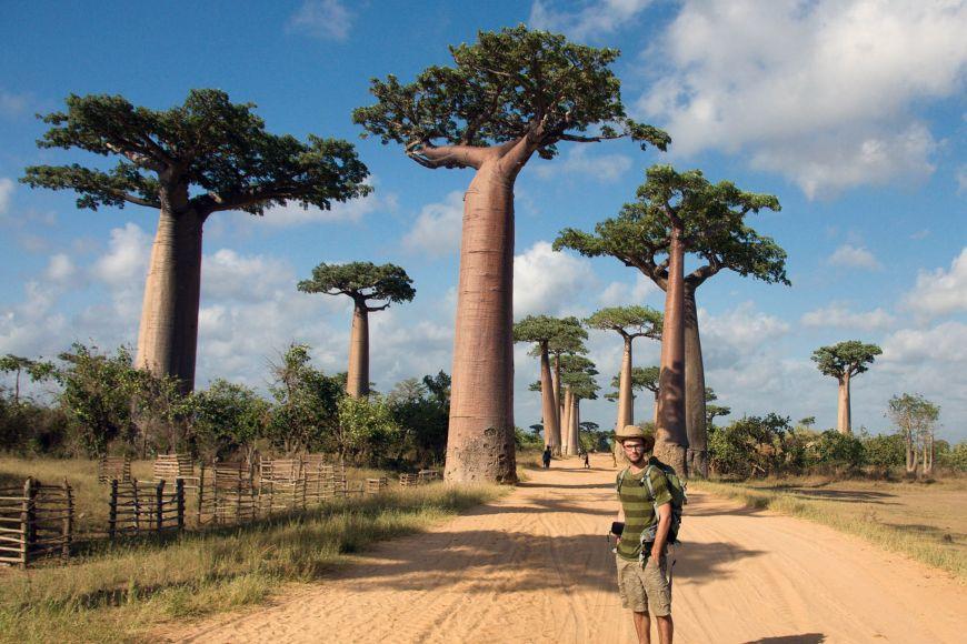 Madagascar is battling intensive deforestation and devastation of nature.