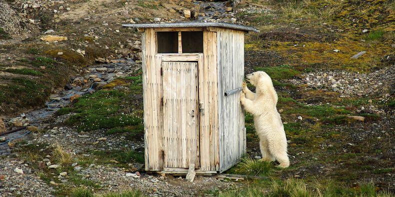Na Špicberkách žije ledních medvědů stejně jako lidí.