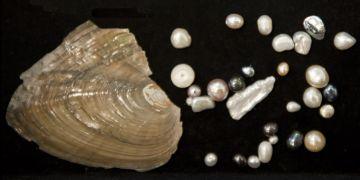Perly mohou mít mnoho různých odstínů i barev, a přestože kulaté jsou nejznámější, jsou poměrně vzácné.