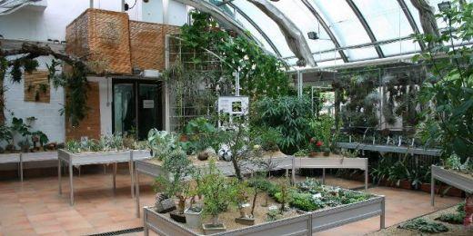 Větší prostor letos pořadatelé věnují rodu Euphorbia (česky pryšce nebo euforbie). Jde o velmi rozsáhlou a rozmanitou skupinu rostlin, oblíbenou mezi sběrateli. Foto: Botanická zahrada PřF MU.