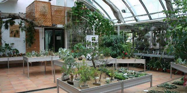 Větší prostor letos pořadatelé věnují rodu Euphorbia (česky pryšce nebo euforbie). Jde ovelmi rozsáhlou arozmanitou skupinu rostlin, oblíbenou mezi sběrateli. Foto: Botanická zahrada PřF MU.
