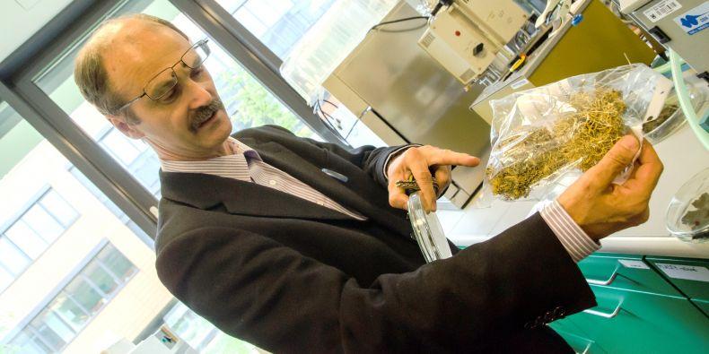 Miloš Barták ukazuje keříčkovité lišejníky rodu provazovka, které patří k organismům často používaných v experimentální práci, například při zjišťování odolnosti vůči zastavení fotosyntézy.
