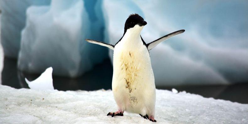 Vědci míří do Antarktidy.