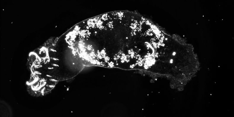 The newly discovered species of parasitic wormsare several millimetres long and are only found on fish from the Cichlidae family, who are only found in Lake Tanganyika.