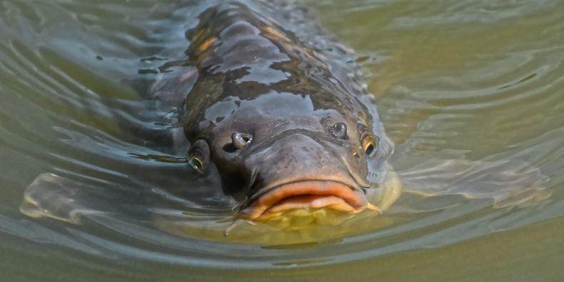 Díky vědcům z Recetoxu je možné měřit znečištění vody bez nutnosti zabíjet ryby