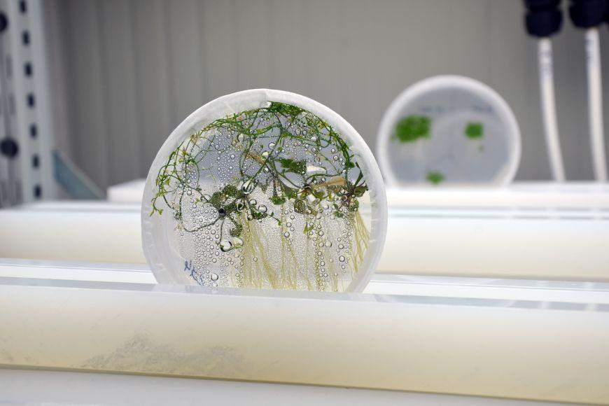 Odborníci zvýzkumného programu Genomika aproteomika rostlin zkoumají vliv změn prostředí na růst rostlin.