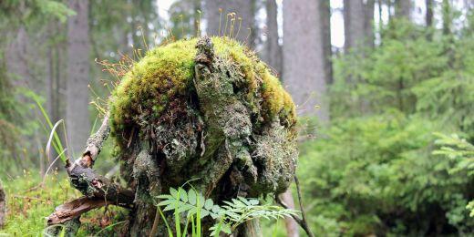 Divoké přírody je v Česku podle výzkumu málo.