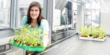 Tereza Dobisová vysvětluje, že signály z prostředí jsou rostlinami vnímány nepřetržitě a rostlina je musí umět integrovat do svých základních vývojových programů.