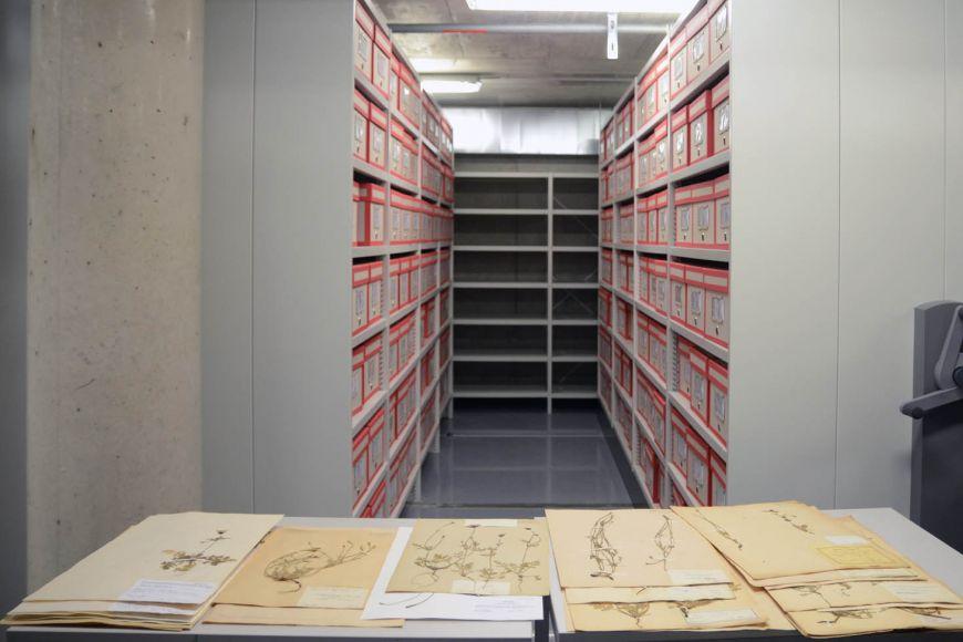 Krátce po svém vzniku měl herbář přes 30tisíc položek, dnes je jich 650tisíc.