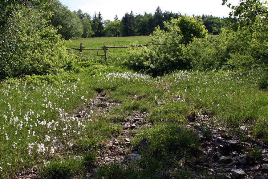Iniciální bazické slatiniště vzniká vmístech, kde se vlivem sesuvu podloží obnaží rozhraní nepropustných jílovcových apropustných hrubozrnných pískovcových vrstev. Jsou na ně vázány specifické aunikátní druhy vodních bezobratlých, například larvy vodního brouka Eubria palustris nebo chrostíka druhu Synagapetus.