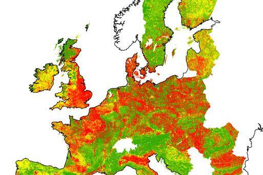 Invazemi je nejvíce postižená střední azápadní Evropa, zejména oblasti sintenzivním zemědělstvím. Zdroj: Archiv M. Chytrého.