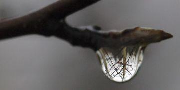 Princip zobrazování vytváří v životě řadu krásných věcí, přenese třeba celý stromu do malé kapky vody.
