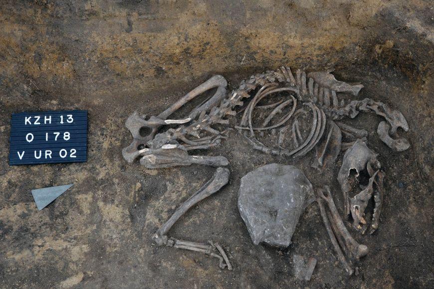 Kostra psa, kterou archeologové našli vrohu obydlí nedaleko hrobu bojovníka.