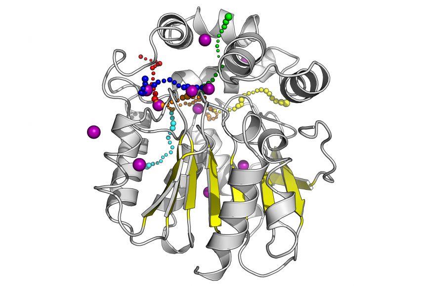 Strukturní model enzymu halogenalkandehalogenasy DhaA. Barevné tečkované dráhy zobrazují molekulární tunely vedoucí do aktivního místa enzymu, kde dochází kchemické přeměně substrátu. Fialové koule představují atomy kryptonu, který byl použit pro experimentální mapování molekulárních tunelů.