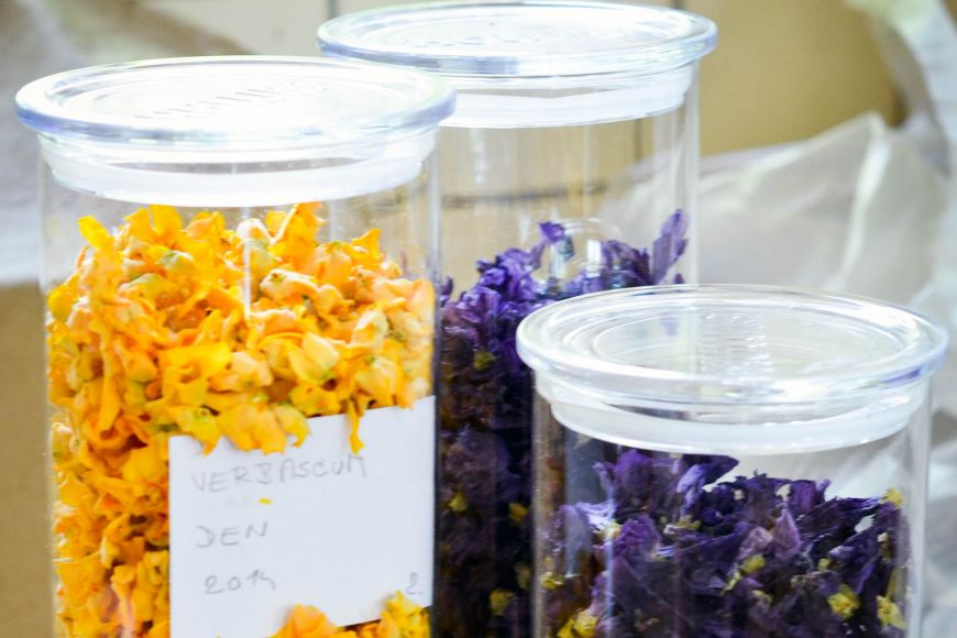 Pracovníci centra sbírají asuší příšlušné části rostlin, které pak dodávají medikům.