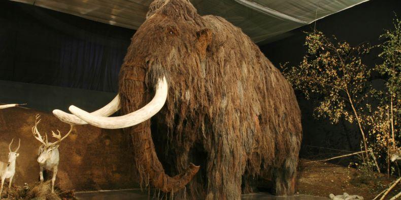 Na Moravě přebývala nejen stáda mamutů a sobů, ale i nosorožci, smečky lvů, levharti a hyeny. Ilustrační foto: Petr Novák, Wikipedia.