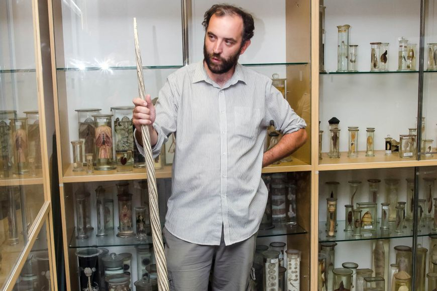 Zoolog asprávce sbírky Jan Sychra se zubem narvala.
