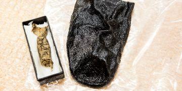 Prst (vlevo) už zkoumali antropologové z Přírodovědecké fakulty MU a podařilo se jim zobrazit papilární linie, a získat tak otisky prstu barona. Vytvořili i jeho 3D model (vpravo).