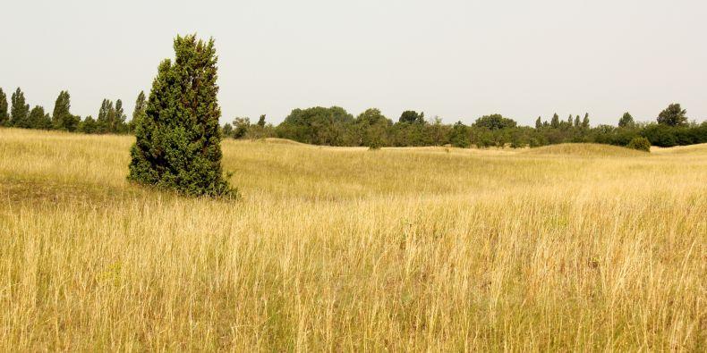 Příkladem kriticky ohroženého stanoviště jsou panonské písečné stepi, jejichž dřívější rozsáhlá plocha se zmenšila na nepatrný zlomek v důsledku zalesňování a nežádoucího obohacování živinami. V ČR se vyskytují poslední zbytky tohoto biotopu na písčinách u Hodonína.