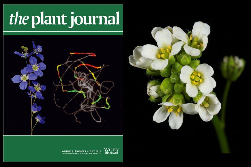 Vědci zMuni se se svým výzkumem dostali na obálku časopis Plant Journal.