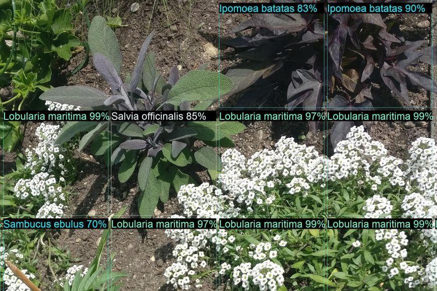 Takhle by mohl vbudoucnu vypadat výsledek zPlant.id. Na fotografii shluku rostlin umělou inteligenci určené pravděpodobností, sjakými se jedná odaný druh.
