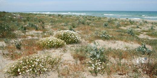Jeden z vegetačních typů: Pobřežní duny. Zde v italském Garganu.