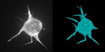Mít možnost popsat chování buněk, snímat jejich pohyb a jeho změny je dnes zásadní pro vědu i pro průmysl.