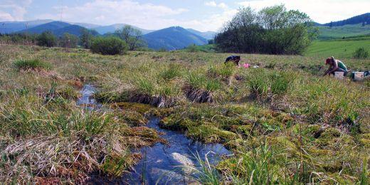 Slatiniště vyvinutá na vydatnějších pramenech obsahují trvalé tůňky nebo tekoucí stružky s hlubší vodou. Vodním bezobratlým poskytují stabilní podmínky.