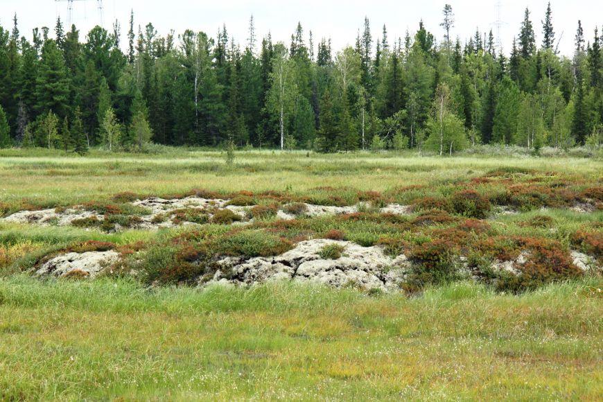 Do nejvyšší kategorie kriticky ohrožených patří rašeliniště typu palsa, která se vyskytují vzóně arktické tundry. Spostupujícím globálním oteplováním však začínají ledové čočky tát, čímž hrozí neodvratný zánik tohoto typu stanoviště.