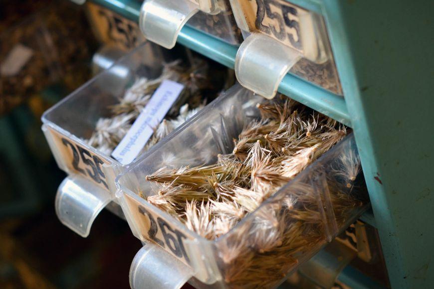 Centrum léčivých rostlin spravuje isbírku semen, která si vyměňuje sdalšími botanickými zahradami ve světě.