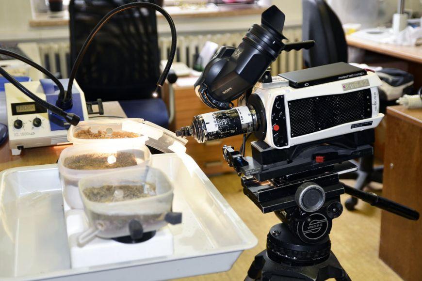 Filmaři si přivezli speciální kameru, která dokáže zachytit až 1500 snímků za vteřinu, aumí tak zaznamenat velmi rychlý útok pavouka na mravence. Foto: David Povolný.