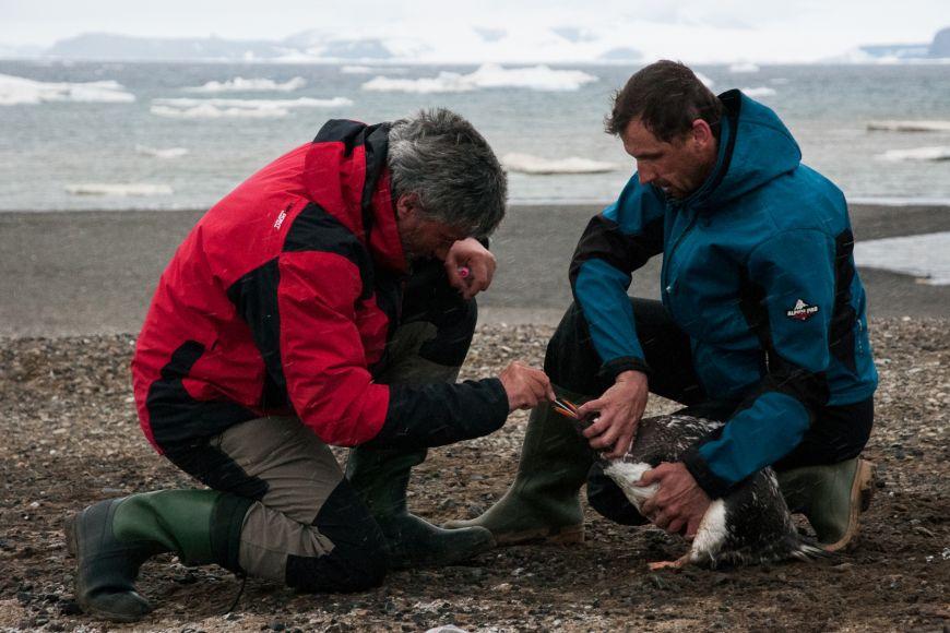 Vědci budou pokračovat vprůzkumu jak mikroorganismů žijících vpůdě, ve vodě atak nově ibakterií osídlujících sliznice atrávicí trakt tuleňů atučňáků.
