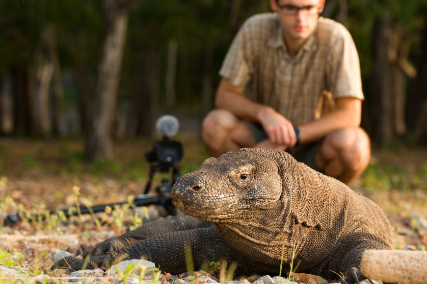 Natáčení zvířat, akomodských draků obzvlášť, je jen pro trpělivé.