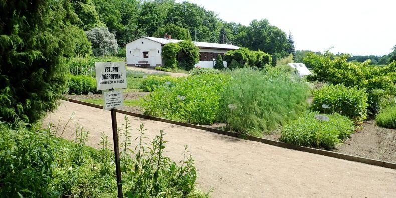 Centrum léčivých rostlin Lékařské fakulty MU, která se nachází na brněnské Kraví hoře, je přístupné i mimo termín výstavy od května do září.