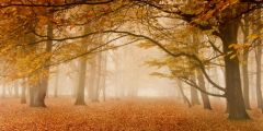Jakmile stromy shodí svůj listový kabát, jsou na zimu připravené. Není to ale plýtvání energií a živinami? Ne tak docela; a důkaz máme každý podzim kolem nás v podobě barevných listů.